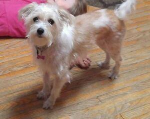MISSING DOG -  PLEASE HELP BEL GET HOME