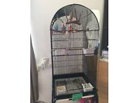 2 budgies and cage (items inside includes)