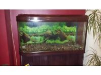 Bullet shape 300l fish tank with cabinet