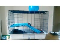 Rat cage for 2 or 4 rats