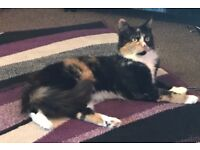 Beautiful female cat, year and a half old. Needs a forever loving home
