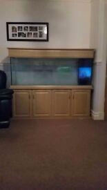 Large fish tank for sale full setup.