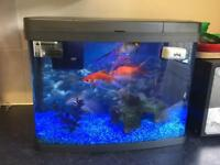 Panorama 40litre Fish Tank