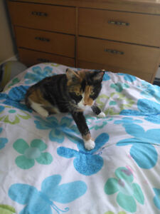 Cat for rehoming free