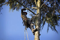 TREE SERVICE & EAVESTROUGH CLEANING