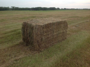 LARGE SQUARE  PEA STRAW BALES FOR SALE