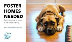 Can I sleep at your house for awhile. Niagara dog rescue