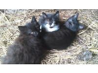 *****only 2 remaining*****beautiful kittens for sale
