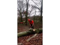 Chainsaw operatives needed for winter forestry work