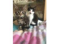 Black and white kitten last of litter