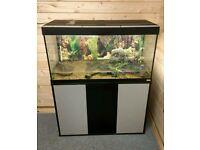 Fluval Roma 200L Tropical Fish Tank Full Setup