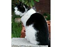 FREE HALF PERSIAN CAT