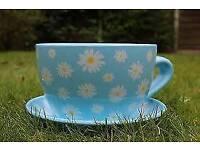 A big daisy tea cup and saucer planter set