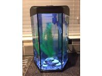 30L love Fish Prism Aquarium & Fish