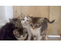 4 Beautiful Kittens For Sale To Good Homes