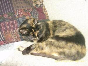 "Adult Female Cat - Tortoiseshell: ""Phoebe"""