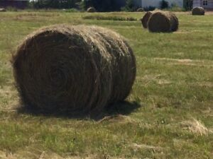 HAY FOR SALE!!!