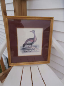 OLD ENGRAVING CANADA GOOSE GOLD FRAME RED SILK MAT