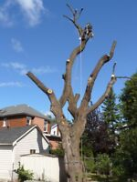 Tree removal,pruning and hedges