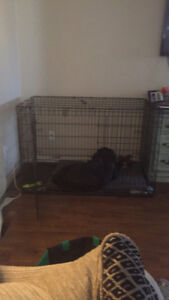 Dog crate/kennel XXL