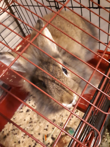 6 month old bunny needs loving home
