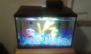 5.5 Gallon fish tank with everything