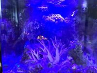 Clown Fish and Corals Complete Setup with Tank