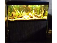 240 ltr 4ft Fish Tank & Stand