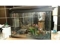 Fish tank with light, heater and filter