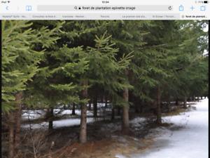 Territoire de chasse Témiscouata,terre à bois St elzear