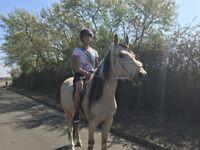 Horse part/full loan