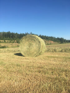 Hay for sale, straight grass, free delivery