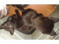 Kitten Need New Homes