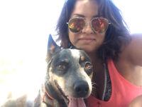 Casual/On call Dog walker/handler