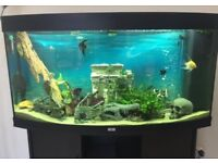 Fish Tank. Auquarium, Juwel 260L, full set up (NO FISH)