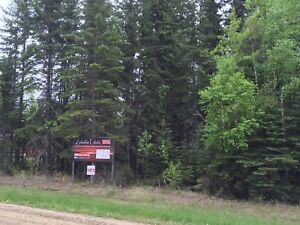 Beautiful, 70x208 Fully Treed Candle Lake Lot; Walk to 3 Beaches