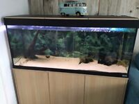Fluval 240l aquarium