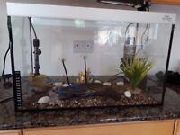 turtle tank fish tank aquarium