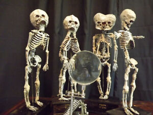4 malformed fetal skeleton specimens oddity halloween horror