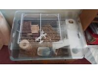 2 russian male dwarf hamsters for sale. Their cages are included in price. URGENT