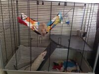 Looking for a new home for 2 gorgeous very friendly male rats, reluctantly rehoming due to new baby
