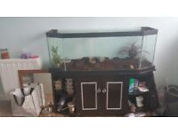 4ft fish tank with cabinet + equipment
