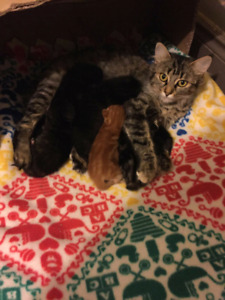 FOSTER HOME NEEDED FOR MOM AND BABIES