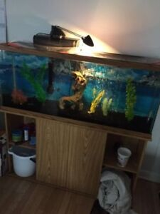 300$ - 55 gallon aquarium, stand, accessories and 8 piranhas