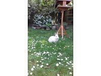 Gorgeous saten rabbit