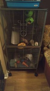 9 ratte + cage NEGOCIABLE