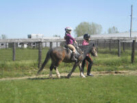 Volunteers wanted for light farm work with horses + kids