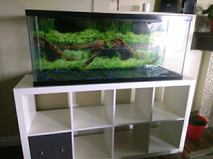 55 gallons fish tank in mint condition