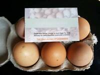 Fresh Eggs Available
