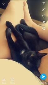 Black kitten in need of a loving home